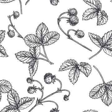 Vector vintage seamless pattern with wild strawberry in engraving style. Hand drawn botanical texture with berries. Black and white floral sketch illustration