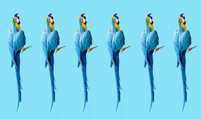 wallpaper with ara parrots (photo) modern pattern on blue background