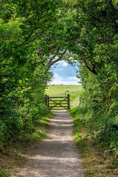Looking along a tree lined pathway towards a gate, with sheep grazing in a field beyond