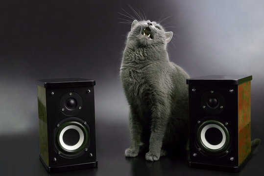 gray cat with open mouth singing with two stereo audio speakers.