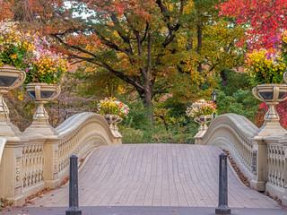 Photo sur Plexiglas Lavende Bow bridge,Central Park, New York Cit