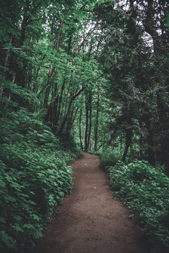 Hiking trail path through lush Pacific Northwest forest in Oregon