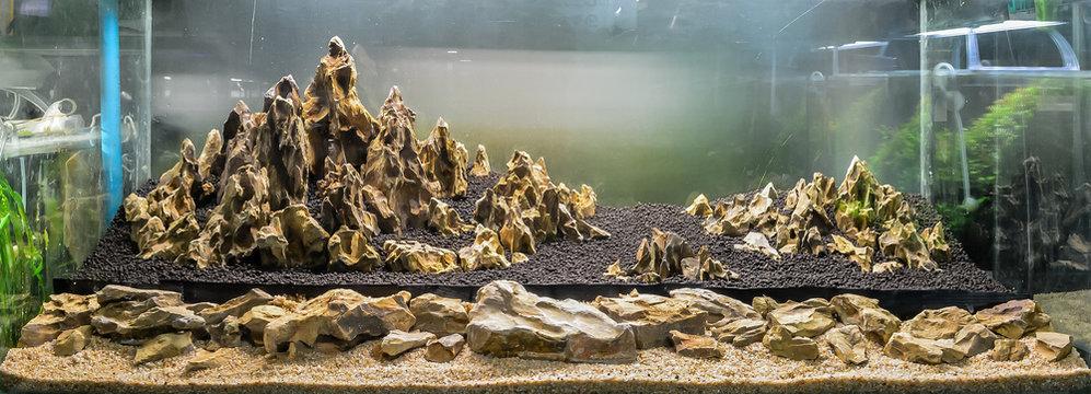dragon stone arrangement on soil substrate .