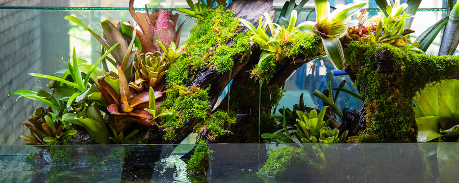 Terrarium style small garden with rock and driftwood.