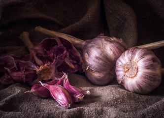 A few heads of fresh garlic on the background of a coarse gray napkin. Selective focus. Blurred background. Vintage, rustic motifs. Still life. Low key lighting.