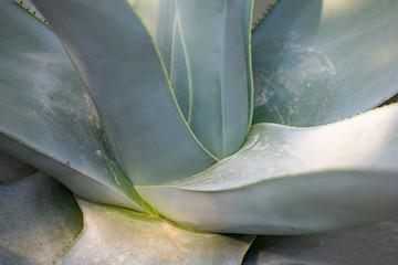 Cactus closeup in tropical garden Nong Nooch.