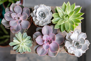 Collection of succulents on the wooden table. Minimalistic home interior with composition of cactus and succulents . Stylish concept of home garden.