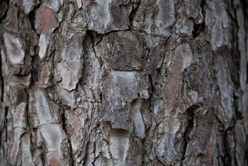 Detail of the texture of the bark of the trunk of a brown colored pine