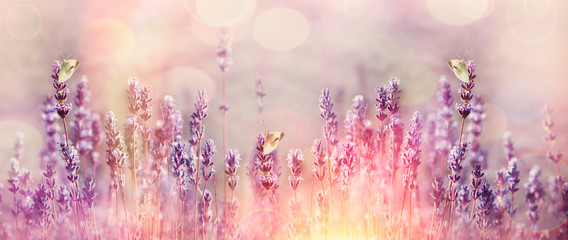 White butterflies on beautiful lavender flower Wall mural