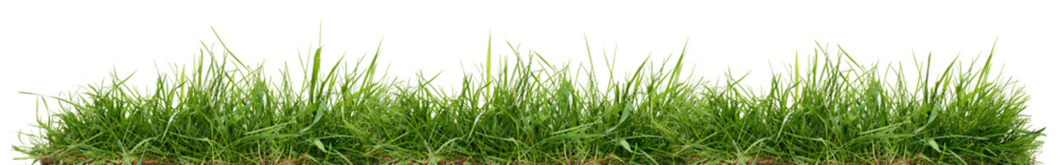 Photo sur Aluminium Herbe Fresh green grass isolated against a white background
