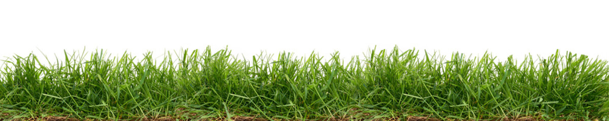 Tuinposter Gras Fresh green grass isolated against a white background