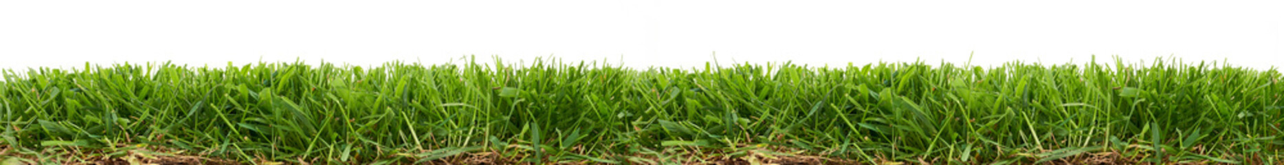 Fresh green grass isolated against a white background Fototapete