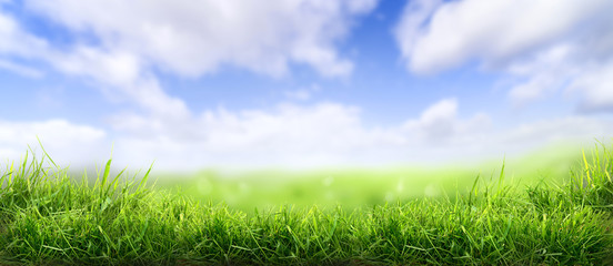 Aluminium Prints Grass Lush spring green grass background with a sunny summer blue sky over fields and pastures.