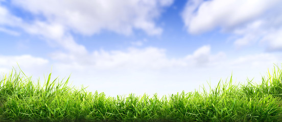 Lush spring green grass background with a sunny summer blue sky over fields and pastures.