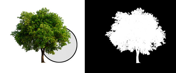 isolated tree on transparent picture background with clipping path, single tree with clipping path and alpha channel on black