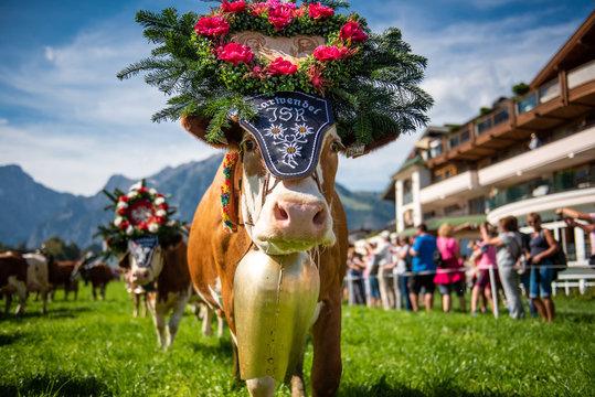 Almabtrieb in Pertisau am Achensee, Tirol / Österreich