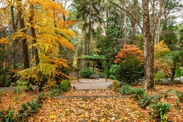 Foto op Canvas Begraafplaats Wooden bench among golden trees in a park in autumn