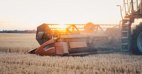 Mähdrescher erntet das Getreide im Sonnenuntergang