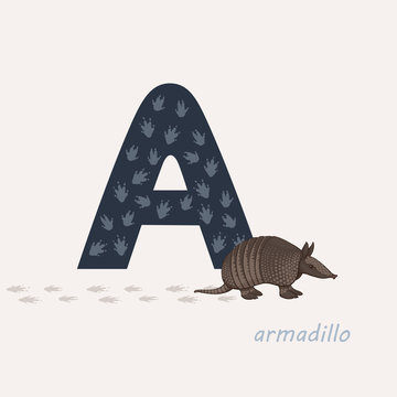 Vector illustration. Blue letter A with armadillo s footprints, a cartoon armadillo. Animal alphabet.