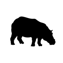 Black silhouette of hippopotamus on white background. Isolated hippo icon. Wild african animals