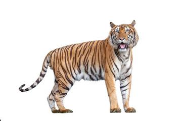 Fotorolgordijn Tijger Tiger action in the nature.
