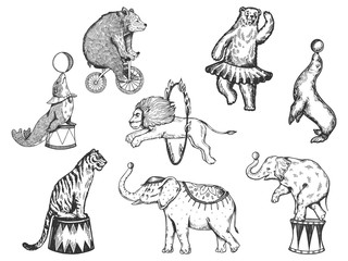 Retro circus animals performance set r sketch vector illustration. Old hand drawn engraving imitation. Human and animals vintage drawings