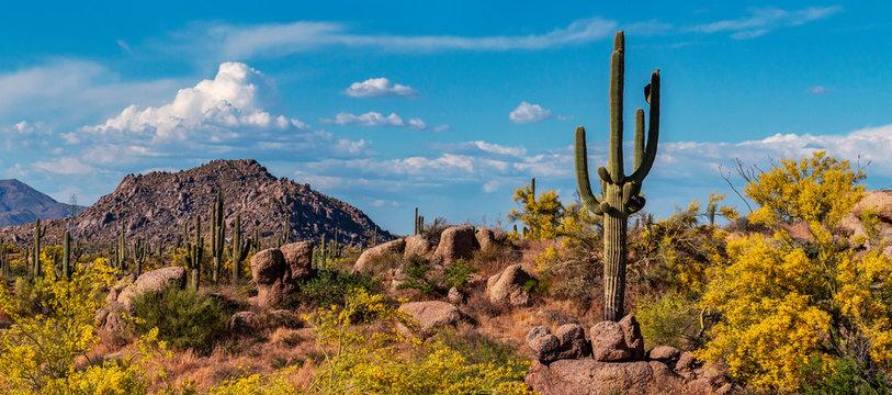Classic Arizona Desert Landscape In The Spring