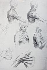 Anatomical notes. Work of hands. Manuscripts of Leonardo da Vinci in the vintage book Leonardo da Vinci by A.L. Volynskiy, St. Petersburg, 1899