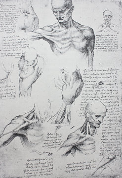 Anatomical notes. Profile, face, foot. Manuscripts of Leonardo da Vinci in the vintage book Leonardo da Vinci by A.L. Volynskiy, St. Petersburg, 1899