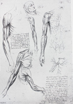 Anatomical notes. Profile, face, foot. Manuscripts of Leonardo da Vinci in the vintage book Leonardo da Vinci by A.L. Volynskiy, St. Petersburg, 1899
