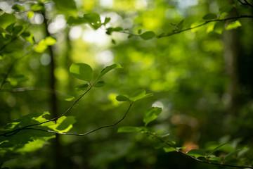 Wald Unschärfe
