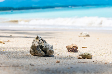 shell on the beach, Hermit crab ,  On the beach, Southeast Alive