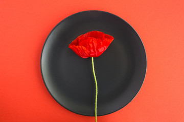One red poppy on the black plate on the red background.Top view.Spring or summer flowers concept.Closeup. Fototapete