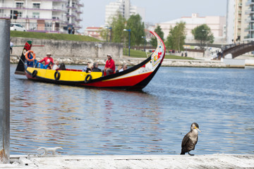 Moliceiro boat from Aveiro, colorful typical boat