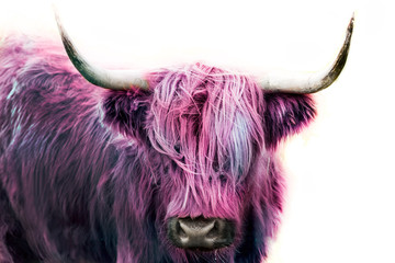 Wall Mural - pink highland cow