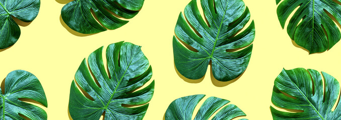 Tropical plant Monstera leaves overhead view flat lay