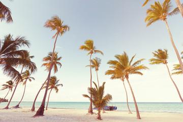 Coconut palm trees an pristine bounty beach Wall mural