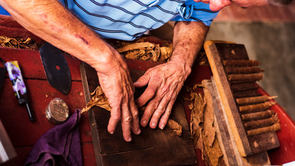 close-up of hands of an old man in blue shirt making cigars on wooden table