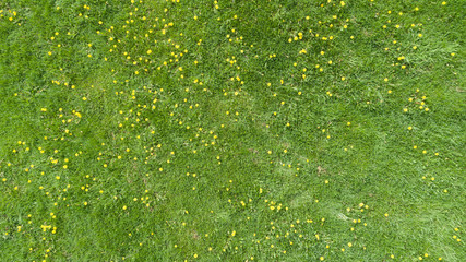Aerial view of a summer field with yellow flowers