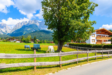 Wall Mural - Green pasture for horses in Going am Wilden Kaiser village on beautiful sunny summer day, Tirol, Austria