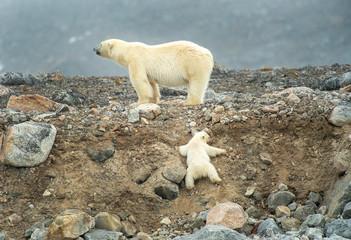 Deurstickers Ijsbeer Polar bear mother & cub