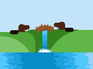 Beaver and dam. semi-aquatic mammal of order of rodents