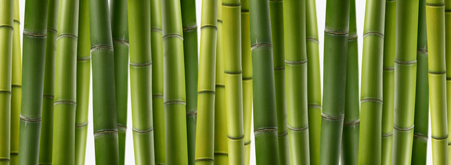 Poster Bamboe the background of green bamboo