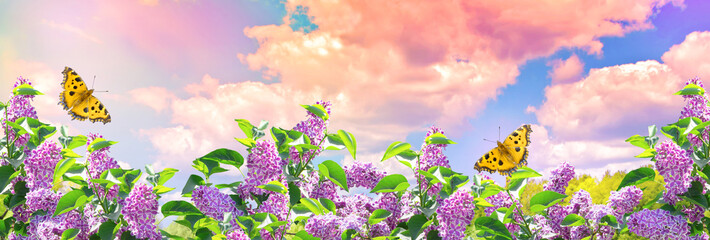 Photo sur Aluminium Lilac Lilac flowers and butterflies in garden against the blue sky with spectacular clouds