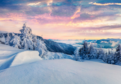 Frosty winter morning in Carpathian mountains with snow covered fir trees. Colorful outdoor scene before sunrise, Happy New Year celebration concept. Artistic style post processed photo.