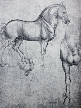 Sketch of horse, pencil drawing in a vintage book Leonard de Vinci, author A. Rosenberg, 1898, Leipzig