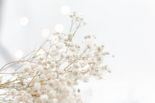 baby's breath with bokeh