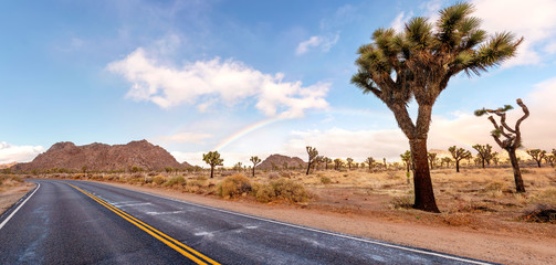 Dessert road with Joshua trees and fantastic landscape around. California, USA. Wall mural