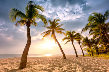 Coconut palm trees against colorful sunset