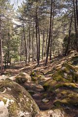 Fototapeta path on the side of a mountain